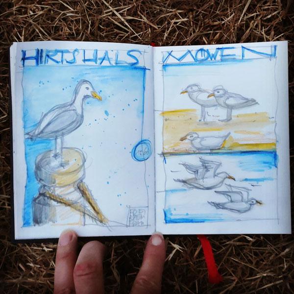 Möwen in Hirtshals